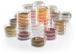 Питательные среды для культивирования и определения микроорганизмов